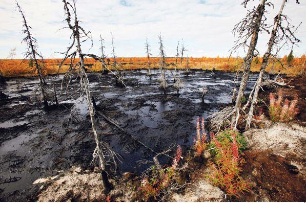 pencemaran lingkungan, macam-macam pencemaran lingkungan, pencemaran tanah