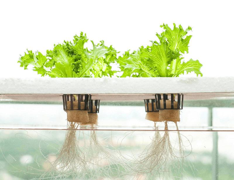 manfaat hidroponik hidroponik sederhana hidroponik sederhana di rumah cara menanam hidroponik dengan botol bekas