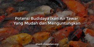 Potensi Budidaya Ikan Air Tawar Yang Mudah dan Menguntungkan