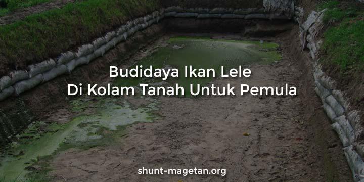 Budidaya Ikan Lele Di Kolam Tanah Untuk Pemula