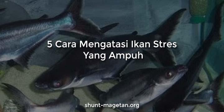 5 Cara Mengatasi Ikan Stres Yang Ampuh